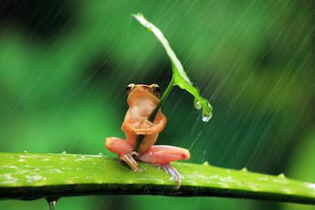 palme frog
